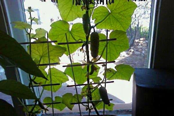 Интересно и декоративно смотрятся шпалеры для домашних ампельных растений