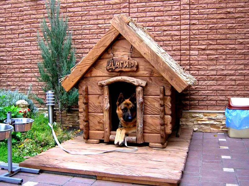 Пёс должен из своего домика наблюдать за происходящим