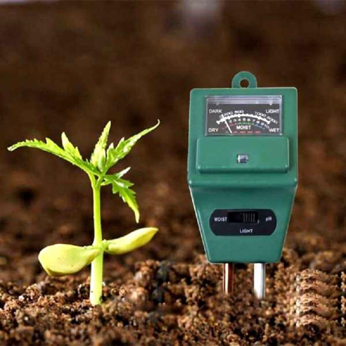 Важно определить качество и состояние почвы