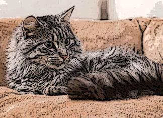 Лежанка для кошки своими руками пошаговая инструкция