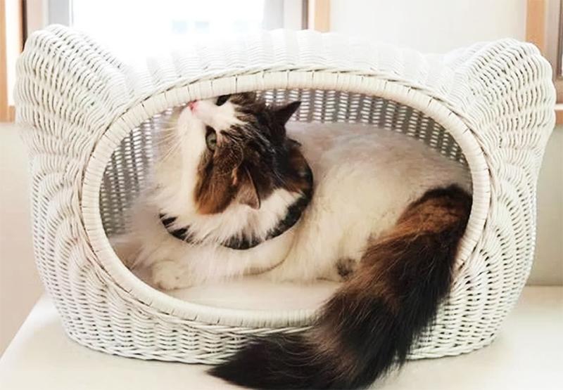Порадуйте своего питомца - пошаговые инструкции по изготовлению своими руками лежанок для кошки