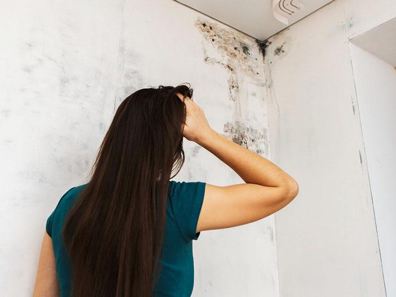 Плесень в квартире принесёт колоссальный вред здоровью
