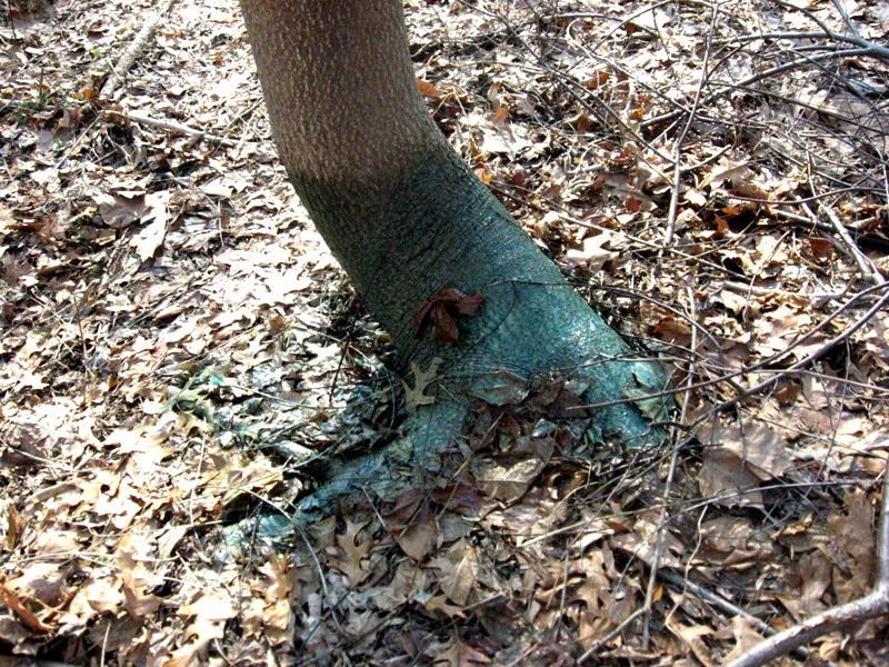 Высушить дерево у соседей помогут химпрепараты