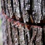 Как сделать, чтобы дерево быстро засохло: самые эффективные и безопасные способы