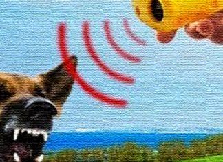 Отпугиватель собак своими руками
