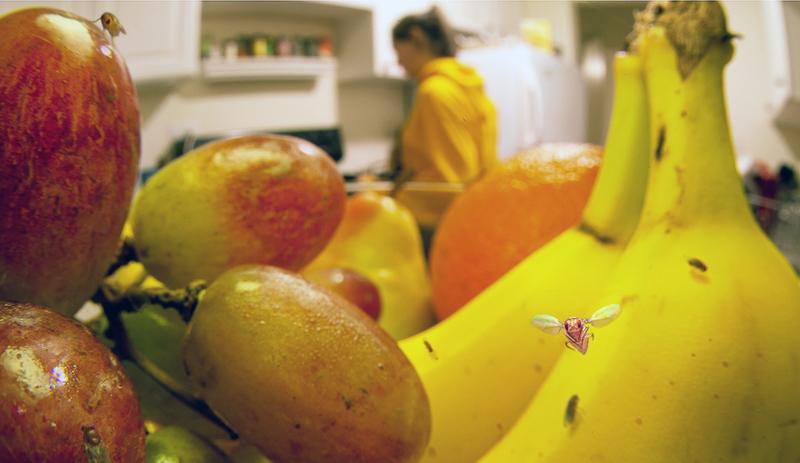 Мошки становятся причиной пищевых отравлений, перенося опасные инфекции