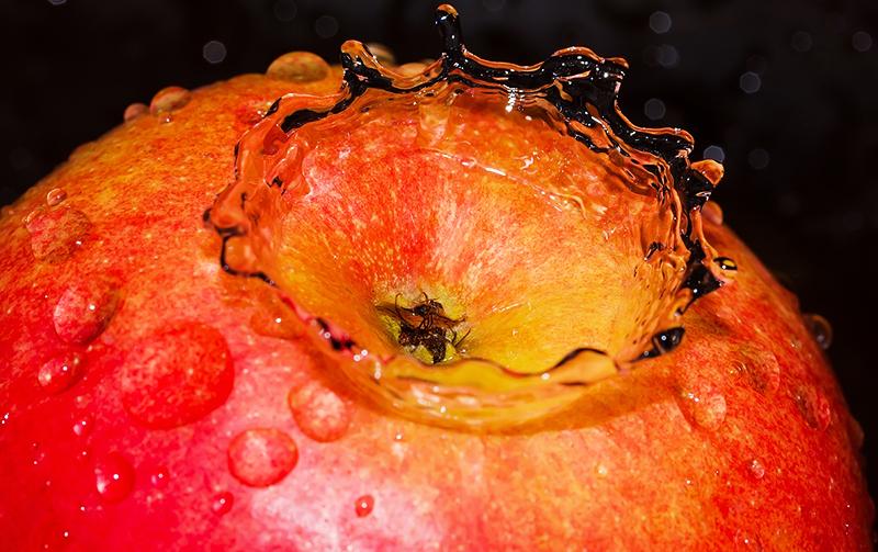 Яблоко – любимое лакомство этих вредителей