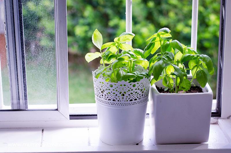 Проблема, если все окна в жилище северные, ведь зимой темно становится рано, и освещения для полноценного роста не хватит