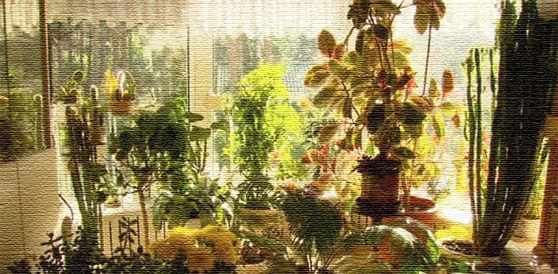 Мини-оранжерея в эркере гостиной