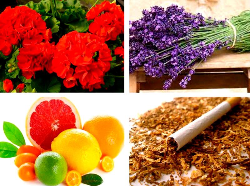 Смесь трав с табаком и апельсиновой коркой обладает навязчивым и отталкивающим запахом. Поэтому аромат будет отпугивать моль