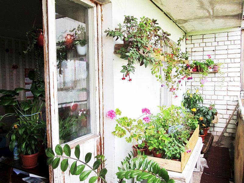 Теплолюбивые растения поместите в деревянные тёплые ящики и, при необходимости, используйте увлажнители. Время от времени не только поливайте, но и опрыскивайте растения, чтобы они получали нужное количество воды