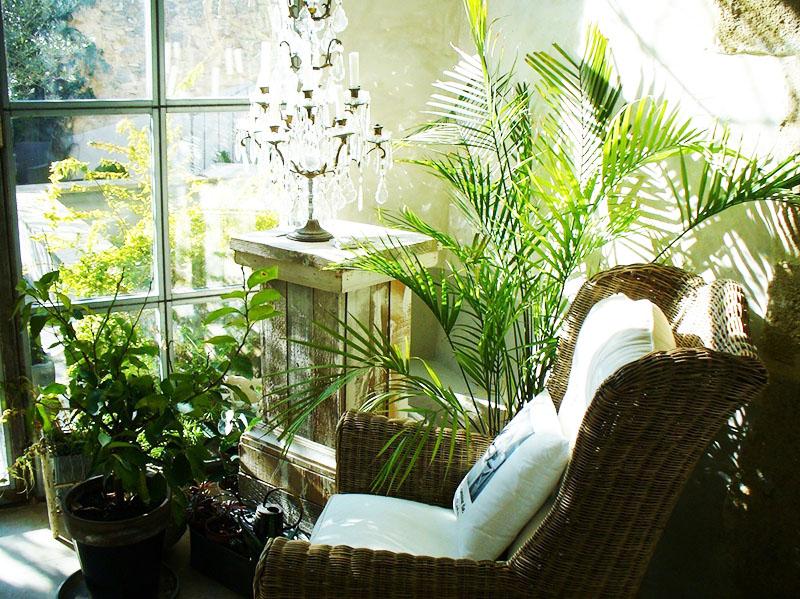 Миниатюрные пальмы украсят вашу лоджию и подарят холодной зимой ощущение тепла и лета