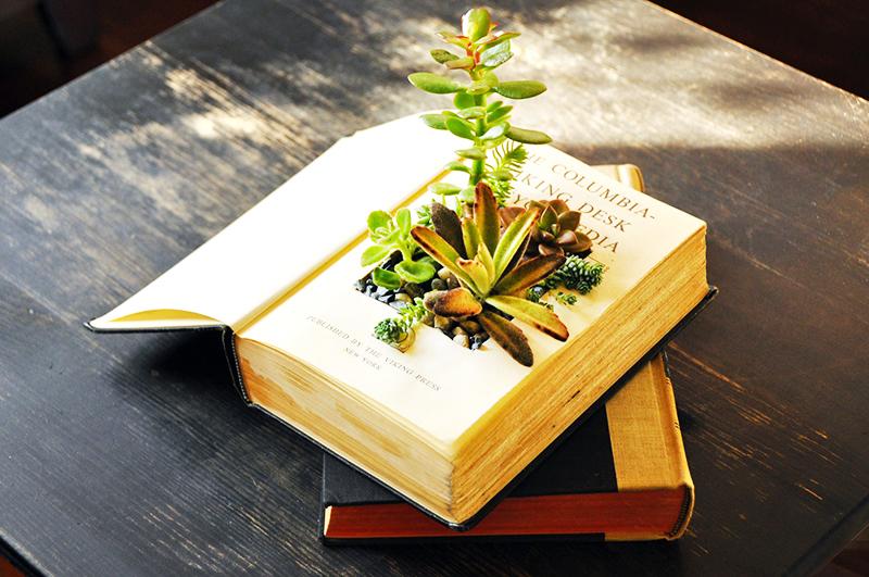 Суккуленты, вырастающие из книги, похожи на экспонат в музее современного искусства. Вы можете посадить в такой «горшок» кактусы, или другие, небольшие растения