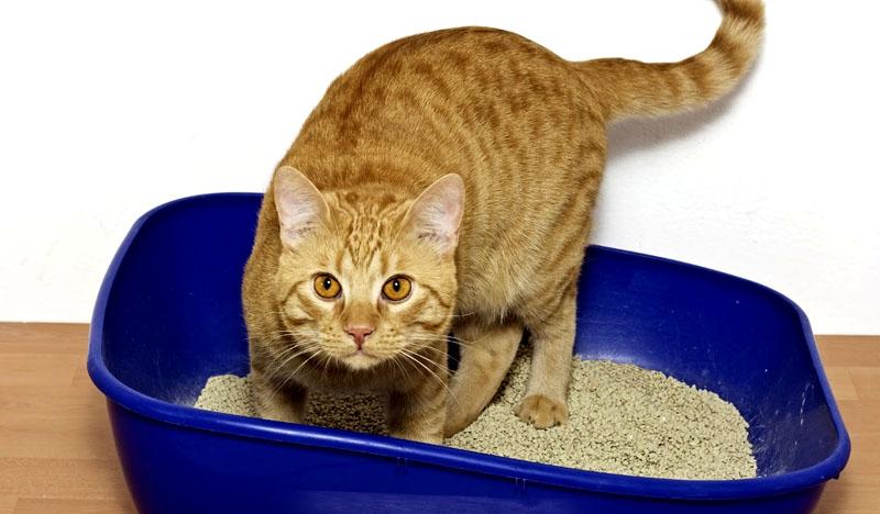 Чтобы кошка не прекращала пользоваться лотком, высыпайте всю соду и насухо вытирайте поверхности перед засыпкой наполнителя