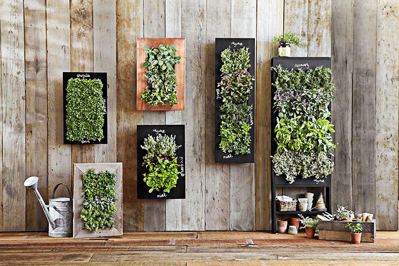 Вы можете создать красивую композицию на стене или каминной полке, высадив несколько видов домашних растений в рамки