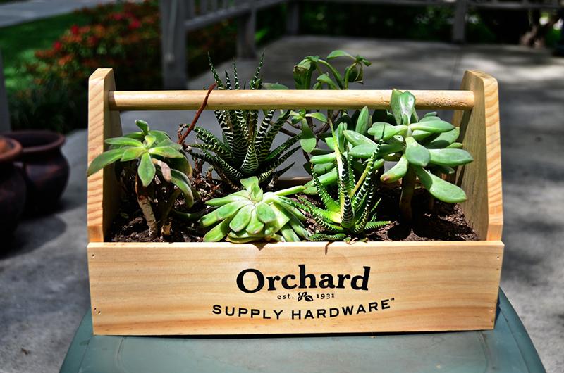 Насыпьте в ящик дренаж, затем небольшое количество земли и только потом приступайте к посадке растений