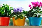 Ловим удачу: денежные растения на подоконнике
