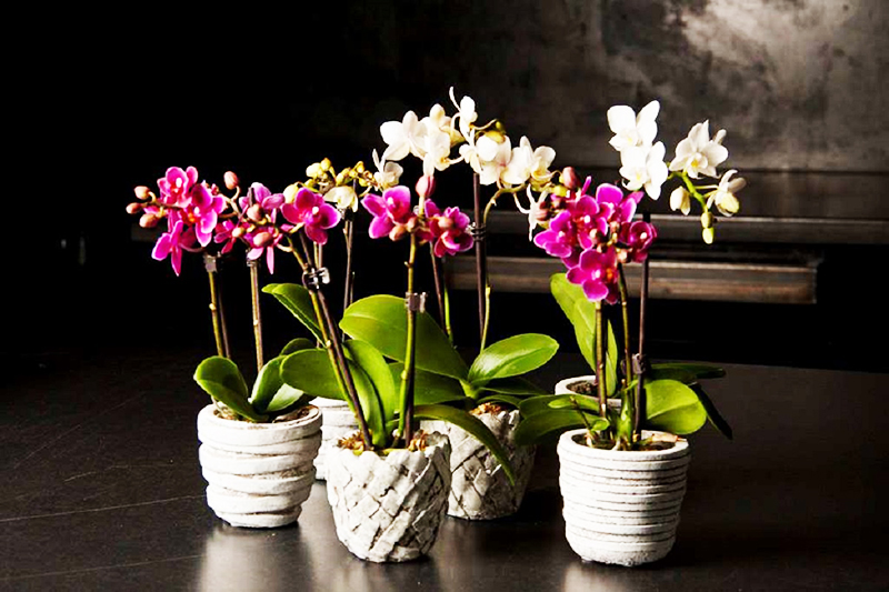 Считается, что люди, увлекающиеся выращиванием орхидей, лучше всего разбираются в различных деловых вопросах и способны успешно закрывать крупные сделки