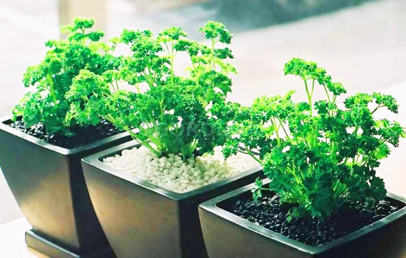 Используйте для посадки семена разных периодов созревания