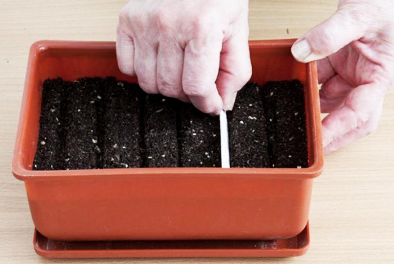 Можно сделать бороздки и в них посеять семена