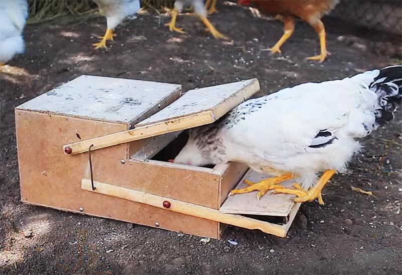 Такая механическая кормушка не позволит птице разбрасывать корм, а кроме того, не даст шанса покормиться грызунам, которые вечно крутятся вокруг курятников