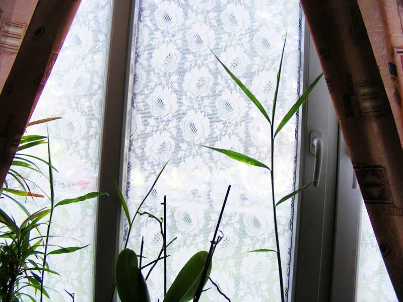 Вот таким интересным может стать оформление вашего окна