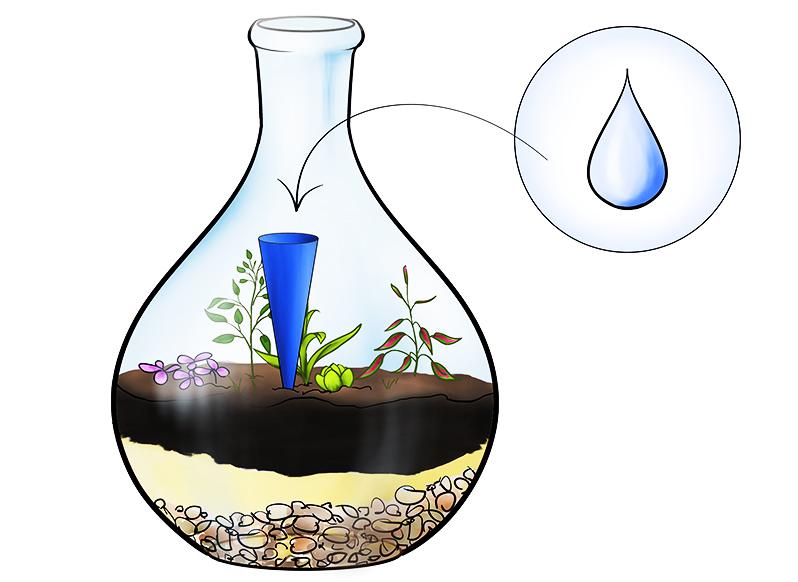 Вариант капельного полива в мини-оранжерее