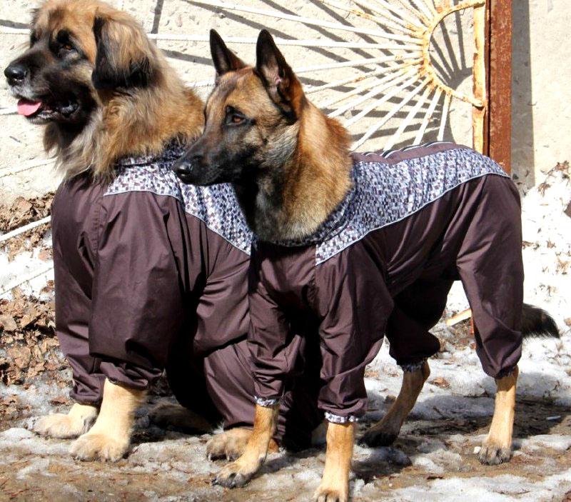 Используйте специальную одежду для защиты питомцев. Стены и лестничные марши в подъездах сегодня обеззараживают особо опасными веществами!