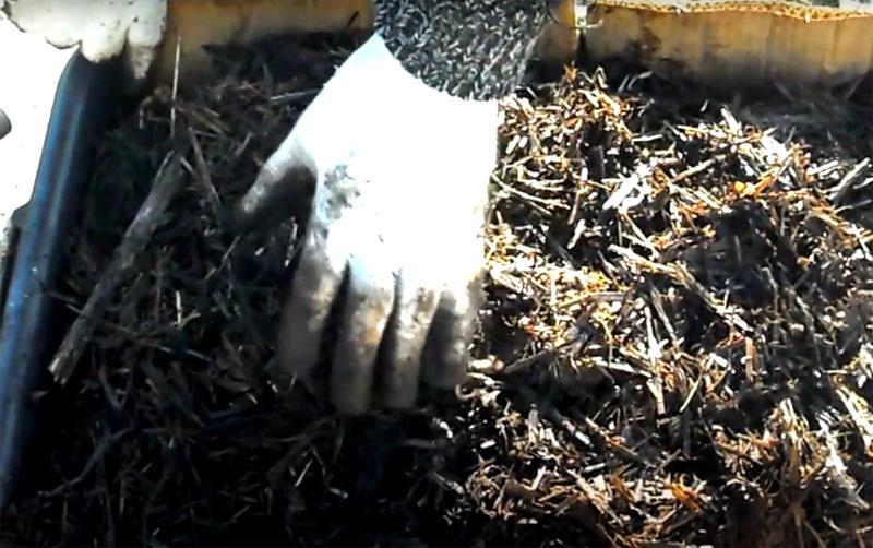При разведении червей в ящике также важно не допускать пересыхания содержимого. Если вы выращиваете в домашних условиях вёшенку – то отработанный грибами субстрат тоже можно поместить в вермикомпостер, он очень понравится червю