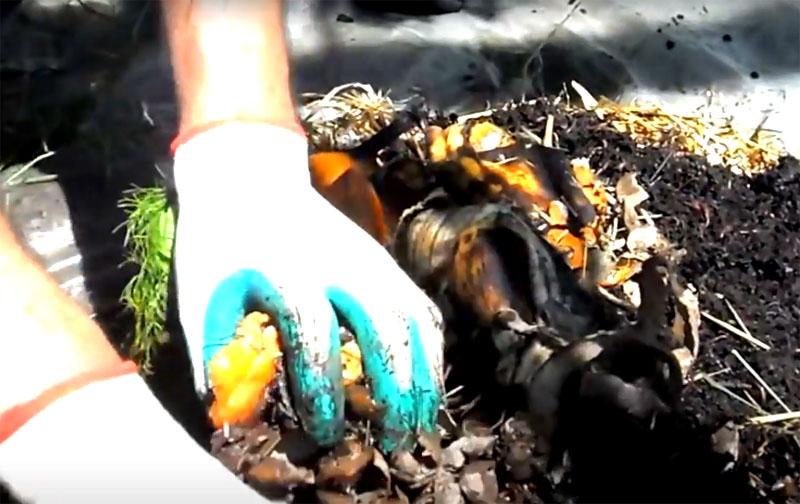 Едой для червятника будут служить пищевые отходы. Черви любят любые овощные и фруктовые очистки, желательно небольшого размера. Не рекомендуется закладывать в вермикомпостер мясные отходы, они будут издавать резкий неприятный запах