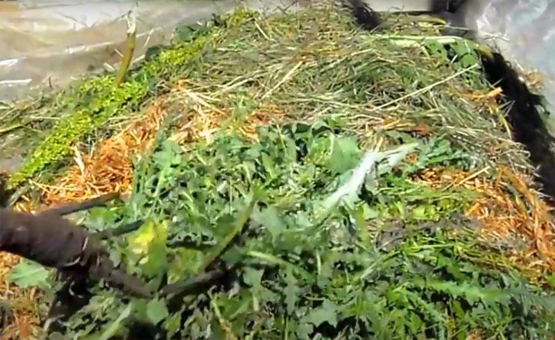 Чтобы червятник не пересох и не перегревался на солнце, его можно укрыть агроспаном или просто закидать остатками травы, которую вы вырвали при прополке