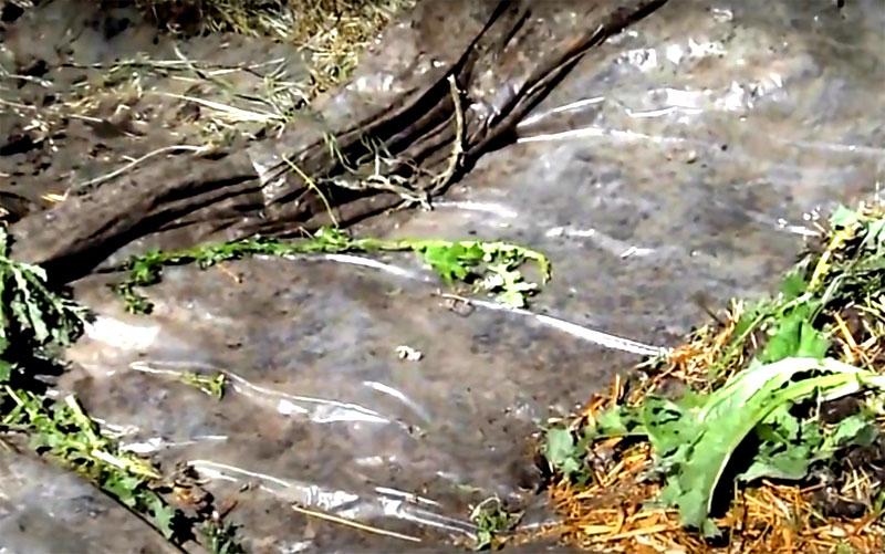 В том месте, где находится нижняя часть естественного уклона грунта, подверните плёнку, создавая барьер. Во время дождя или при поливе лишня влага будет стекать с компостной кучи и собираться в этом желобе. Это так называемый вермичай, который можно использовать для подкормки растений