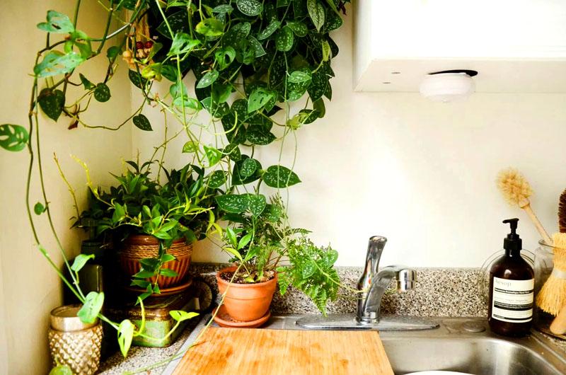Некоторые виды растений можно подвесить в кашпо. Свисающие сверху зелёные листья создадут атмосферу мини-джунглей, и у вас на кухне всегда будет лето