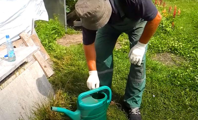 Всё дело в том, что по инструкции для использования ампулу с инсектицидом нужно разбавить в воде, а затем на муравейнике выкопать ямку, залить в неё этот состав и закопать. Часть насекомых, без сомнений, погибнет, но небыстро, а остальные успеют переместить маток в новое место и восстановить колонию. Всё это произойдёт при условии, что вы точно определили место расположения муравейника, скрытого под землёй в многочисленных ходах