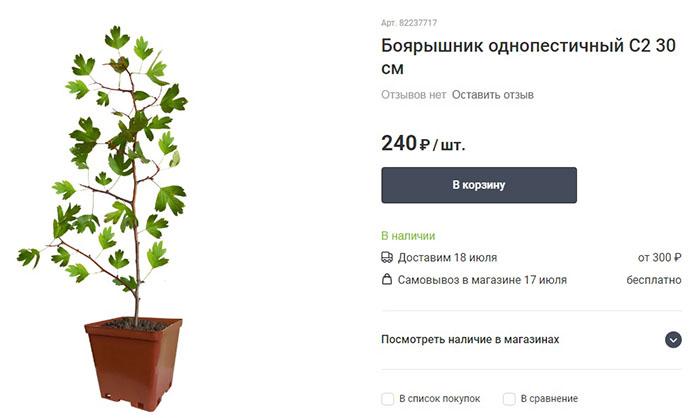 Мы остановили свой выбор на традиционном лечебном растении дачников – боярышнике