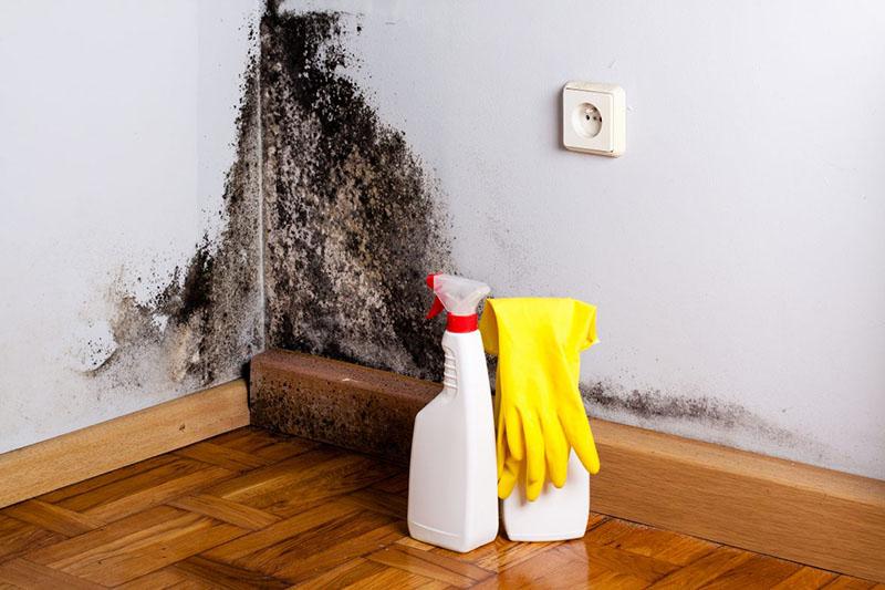 При отсутствии вентиляции в квартире не обеспечивается циркуляция воздуха, из-за чего плесень быстро нарастает на стенах и в углах комнаты