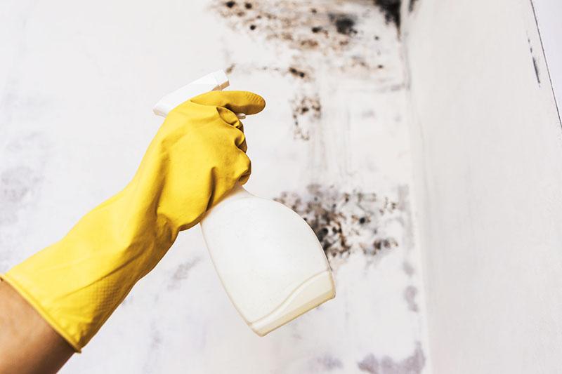 Специалист найдёт все очаги плесени в вашем доме и удалит их
