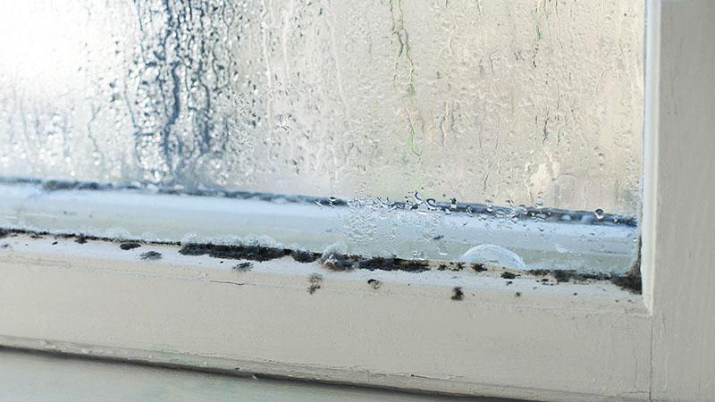 Особое внимание уделите окнам: если заметите на них плесень, значит, нужно вызвать мастера и установить новые окна или отремонтировать старые