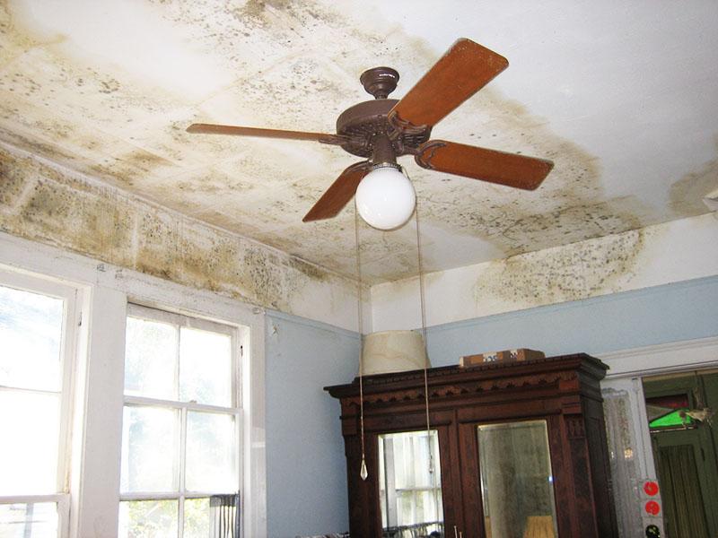 Заполняя стену или потолок, плесень превращает любой отделочный материал в труху