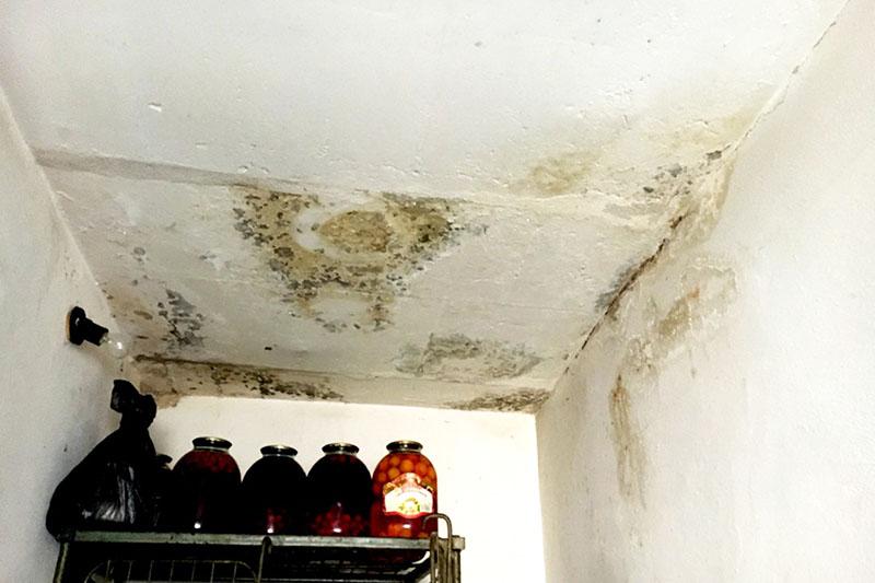 Проверьте стены и потолок возле стеллажа с домашними соленьями и вареньями – там может быть опасная плесень
