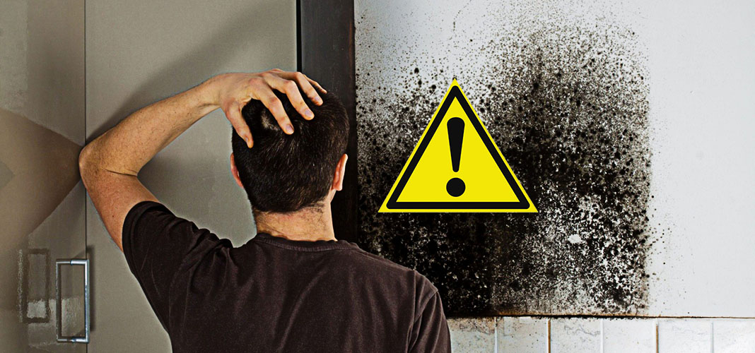 Чем опасна чёрная плесень в доме