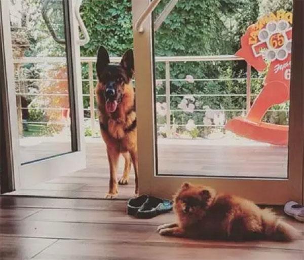 Поправки рекламировал, посмотрим как живет: роскошное имение Олега Газманова в экостиле