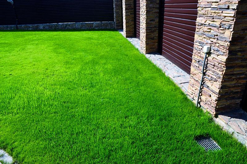 Травяные газоны требуют меньше внимания, чем цветущие