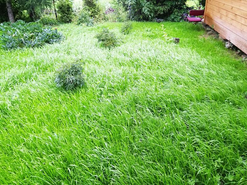 Эту траву уже пора подрезать