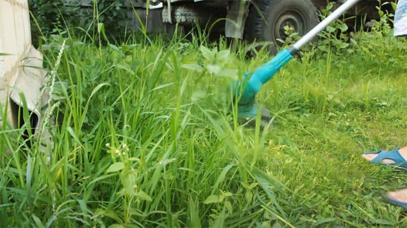 Трава стала высокой, а значит, пришла пора её скосить