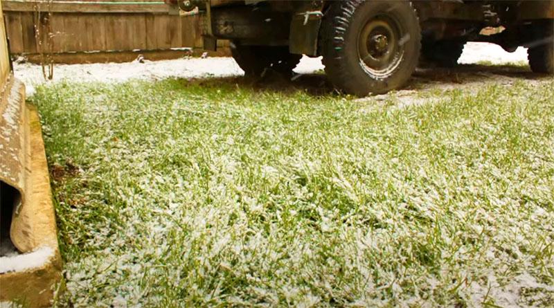 К первому снегу газон уже более аккуратен