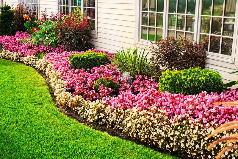 Соседство травы и садовых цветов прекрасно