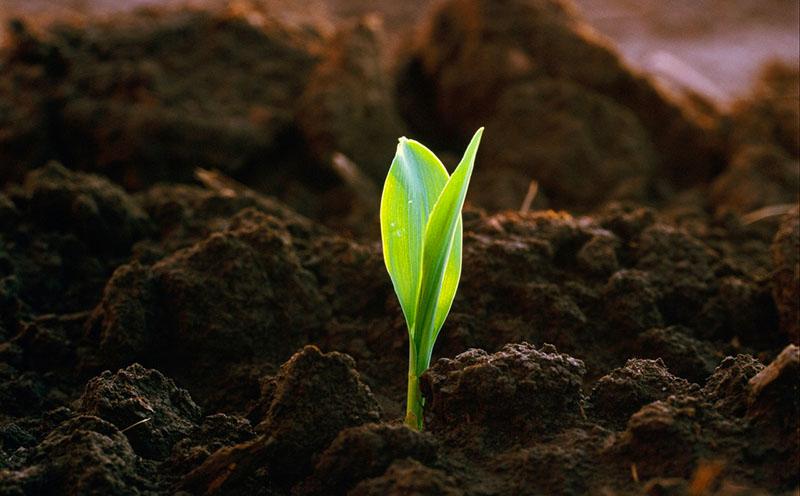 Плодородный грунт способствует развитию растений