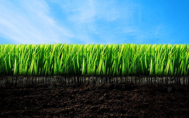 Удобрения ускорят рост и помогут в развитии