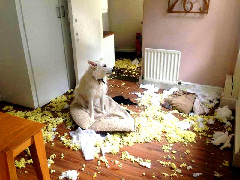 Веселей всего бывает много работающим хозяевам собак